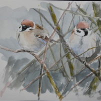 Tree sparrow studies. Watercolour.