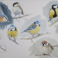 Garden birds. Watercolour.