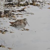 Woodcock in snow. Watercolour.
