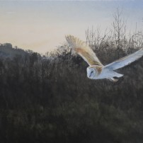 Barn owl, close encounter. Watercolour.